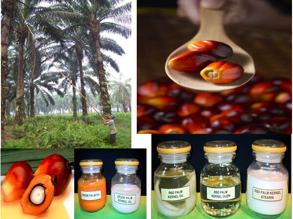 palm_oil_application